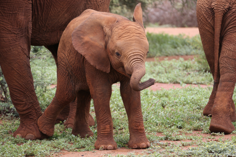 Madikwe Safari Lodge and Game Reserve, SouthAfrica