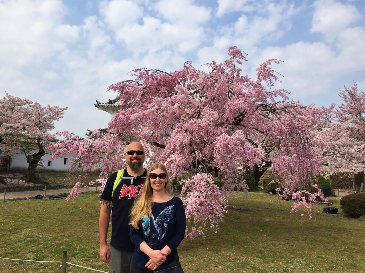 The Sakura, Japan's Cherry BlossomingSeason