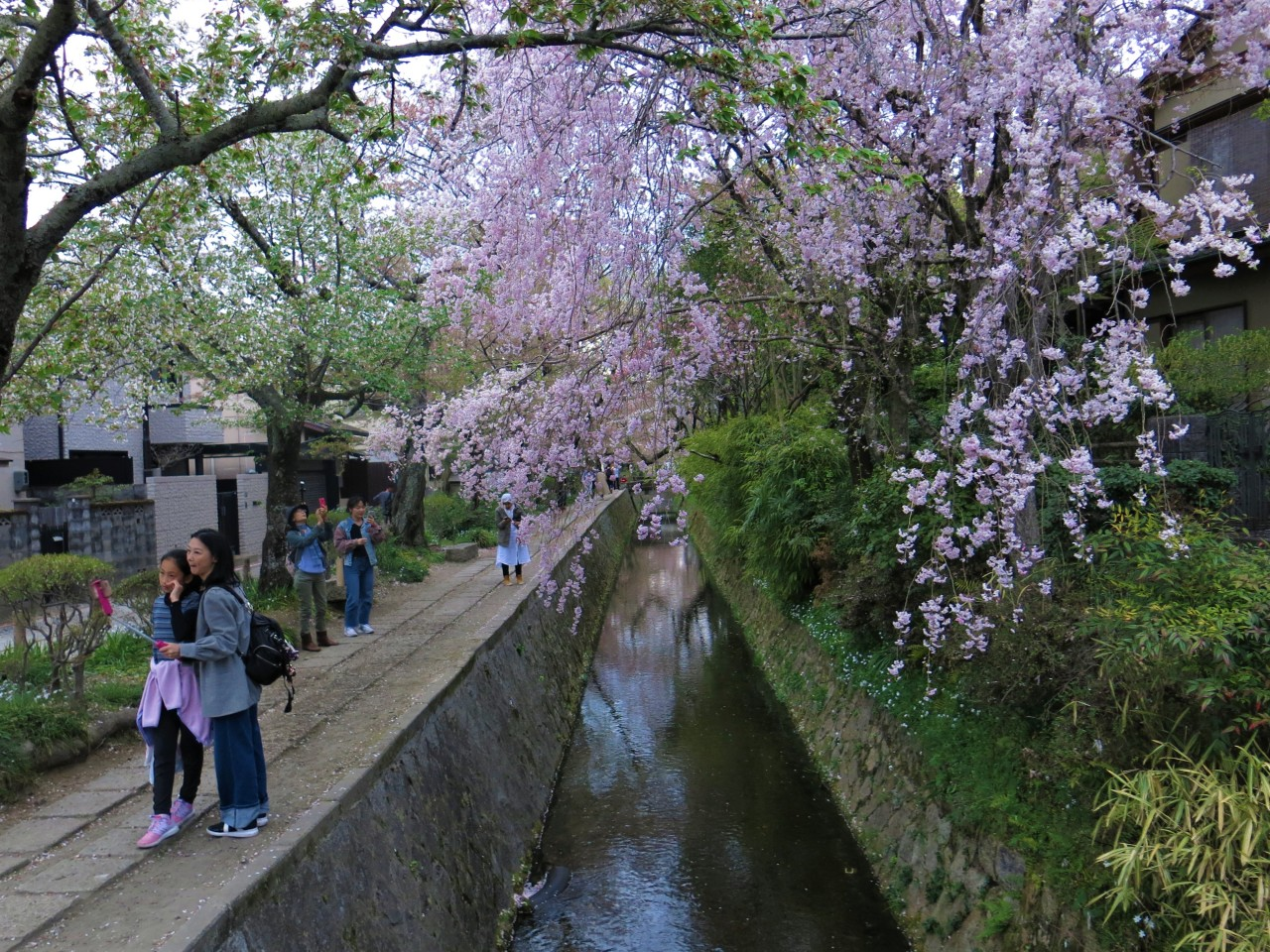 Kyoto! The Philosopher's Path, Fushimi Inari Temple and the GoldenPavillion